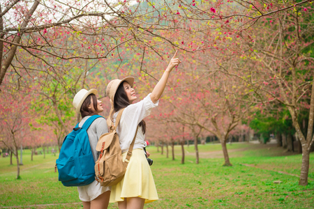 young female backpackers visiting famous cherry tree park in japan and pointing beautiful sakura flowers to sharing enjoying the scenery with girlfriend in trip.