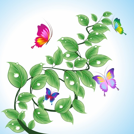 Branch with leaves and drops of water with butterflies. A vector illustration.のイラスト素材