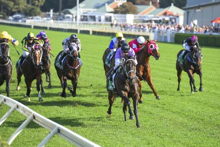 Photo pour Group of horses charging for finish line - image libre de droit