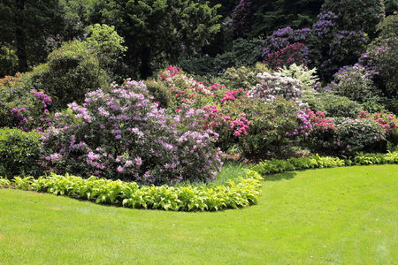 Foto de Beautiful Rhododendron Flower Bushes and Trees in a  Garden Landscape - Imagen libre de derechos