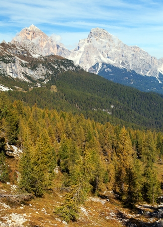 Larch wood and Tofano, Tofana or Le Tofane Gruppe, Alps Dolomities mountains, Italy