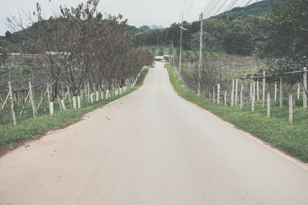 asphalt road to mountain in rural area. countryside road with trees on both sides