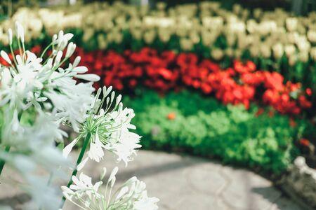 Photo pour blooming flower plant in botany garden park - image libre de droit
