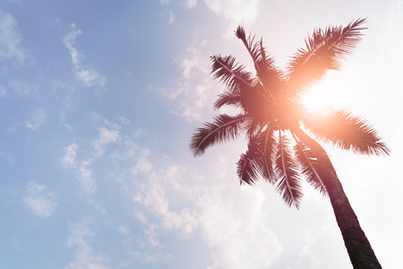 Photo for Holiday loading with coconut trees over clear sky on day noon light - Royalty Free Image