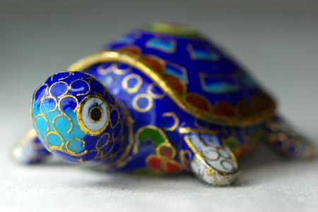 Psudochromis070900049