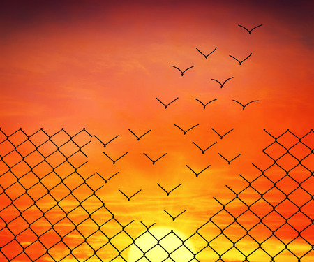 Photo for Metallic wire mesh transform into flying birds on sunset sky - Royalty Free Image