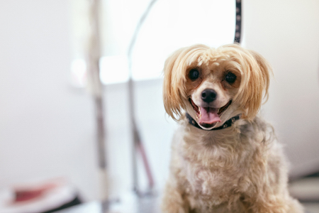 Dog In Pet Grooming Salon. Happy Funny Animal In Pet Spa Salon. High Resolution