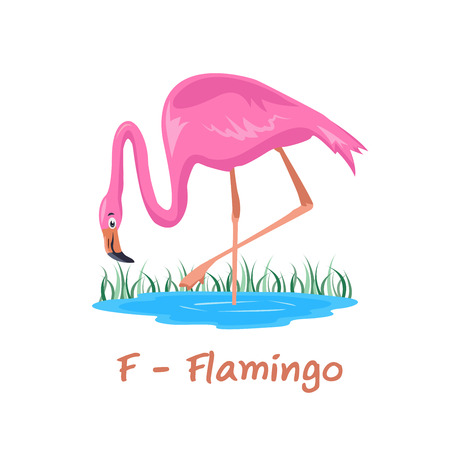 Isolated animal alphabet for the kids, F for Flamingo