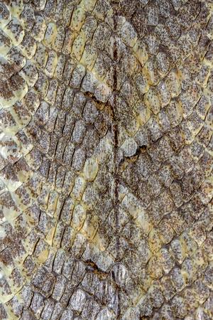 Photo pour Snake skin reptile for pattern - image libre de droit