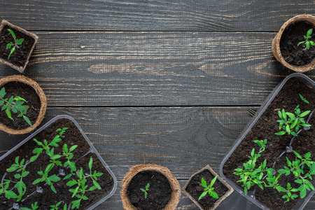Photo pour Eco friendly pots with young tomato sprouts on wooden background - image libre de droit