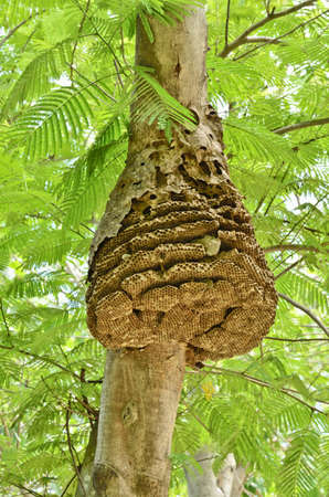 Wasp nest on tree in forest