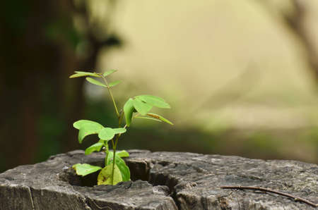 young plant growing on tree stump