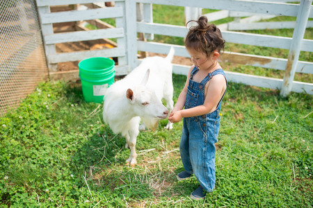 Girl feed the goats