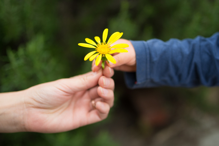 Photo for Parent and child handing a flower - Royalty Free Image