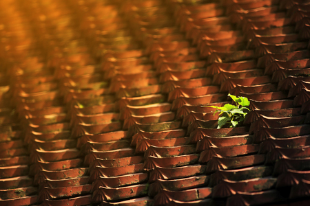 Clay tile roof with moss.