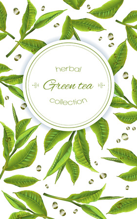 Illustration pour green tea with tea leaves and drops on white. Background design for packaging, tea shop, drink menu, homeopathy and health care products. - image libre de droit