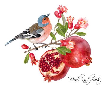 Illustration pour Finch pomegranate card - image libre de droit
