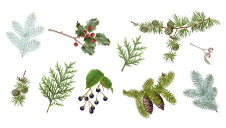 Illustration pour Winter branches set - image libre de droit