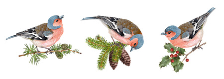 Illustration pour Finch birds set - image libre de droit