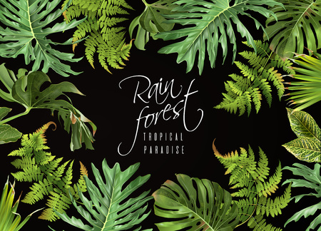 Illustration pour Rain forest banner  on plain background. - image libre de droit