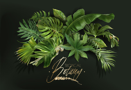 Vector Banner With Green Tropical Leaves On Dark Green Background Luxury Exotic Botanical Design For Cosmetics Spa Perfume Aroma Beauty Salon Travel Agency Florist Shop Royalty Free Vector Graphics