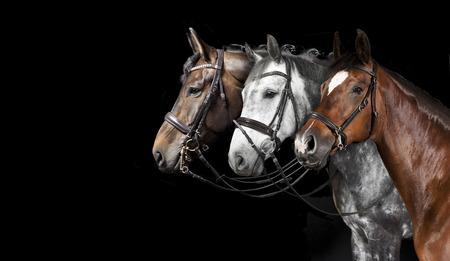 Photo pour different horse with bridle against a black background - image libre de droit