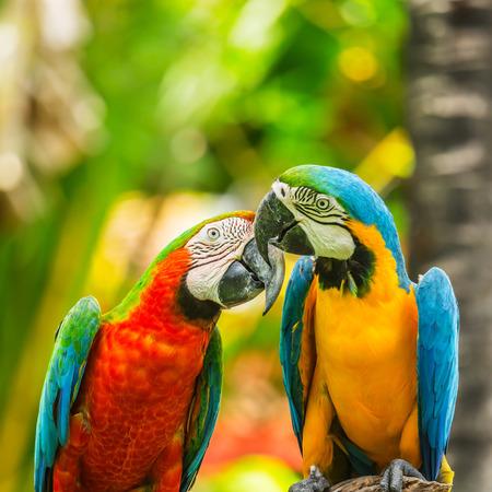 Photo pour Macaw parrots clsoe up - image libre de droit