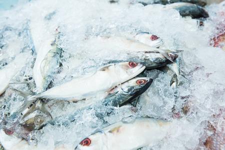 Photo pour Macarel fish in ice - image libre de droit