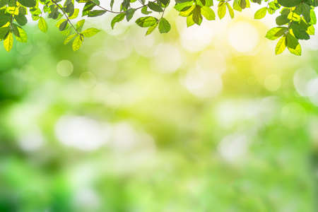 Foto de Fresh and green leaves green bokeh on nature abstract blur background green bokeh from tree.Mock up for display.  montage of product,Banner or header for advertise on social media,Spring and Summer. - Imagen libre de derechos