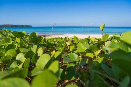 phuket beach with grass