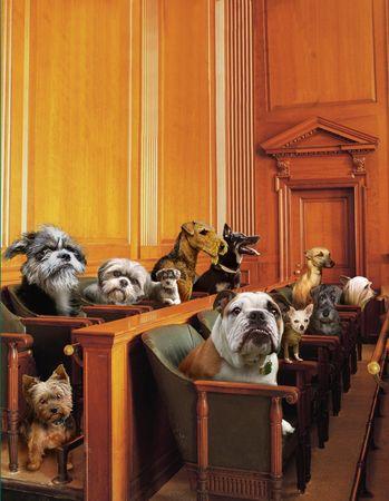 Dog Jury