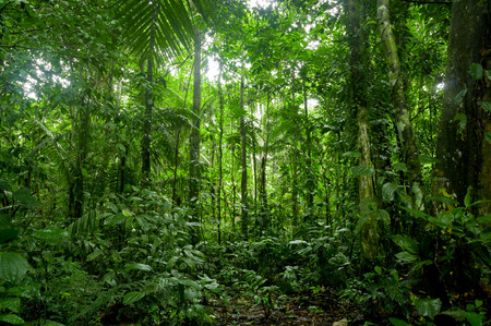 Tropical Rainforest Landscape Amazon