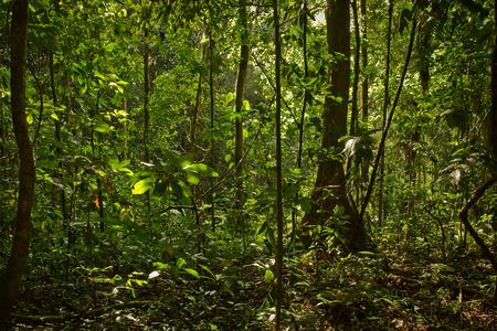 Beautiful landscape of dense rainforest nature, Yasuni National Park, Orellana, Ecuador