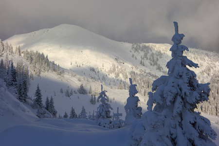 Photo pour Winter in the mountains, trees covered with snow. beautiful sunlight - image libre de droit