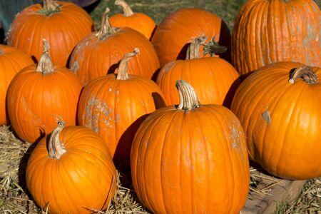 Photo pour pile of ripe orange pumpkins in the fall season - image libre de droit
