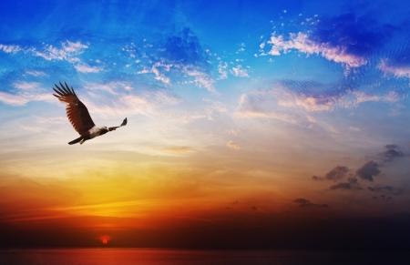 Photo pour Bird of prey - Brahminy Kite flight on beautiful sunset above the sea background - image libre de droit