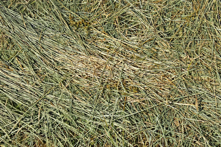 Dries hay with cereal herbs and other wild meadow grasses as a texture, good quality feed for farm animals