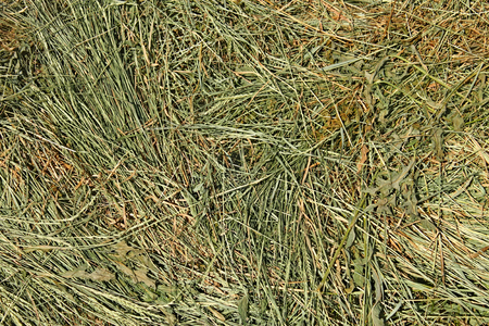 Hay with cereal grasses and other wild meadow herbs as a texture, good quality feed for farm animals