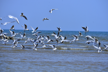 Foto de Seagulls fly in free - Imagen libre de derechos