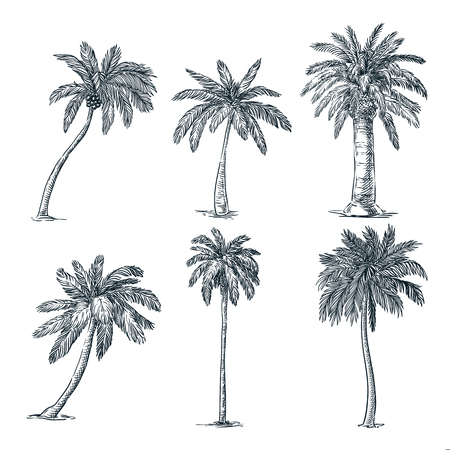 Illustration pour Tropical coconut palm trees set, isolated on white background. Vector sketch illustration. Hand drawn tropical plants and summer floral design elements. - image libre de droit