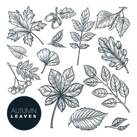 Illustration pour Autumn forest plants and leaves set, isolated on white background. Vector hand drawn sketch illustration. Fall nature design elements. - image libre de droit