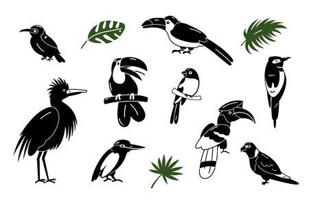 Illustration pour Set of birds. Bright exotic tropical birds. Macaw, Cockatoo, toucan, etc. Vector. - image libre de droit