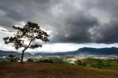 lonely pine tree with colorful cloud on top hill overlooking a valley in Dalat, Da Lat is highland city fog in the morning. Da Lat is one of the beautiful city in Viet Nam.
