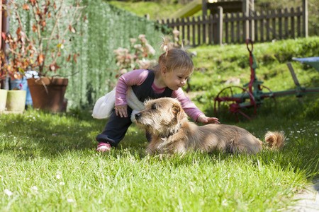 blonde baby two years old age approaching crouching and touching a brown terrier breed dog lying on green grass lawnの写真素材