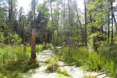 Bialowieza Forest, Podlasie, Poland