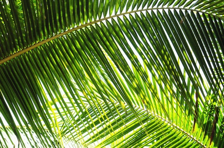 Palm leaves in various green shades