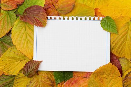 A blank notepad on a background of autumn leaves. Copy spaceの写真素材