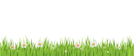 Spring flowers and grass seamless background