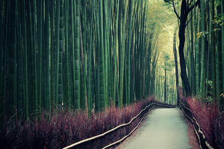 Bamboo Grove in Arashiyama, Kyoto, Japan.