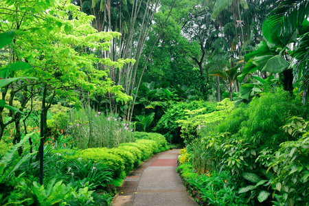 Foto de Green plants in Singapore Botanic Gardens - Imagen libre de derechos